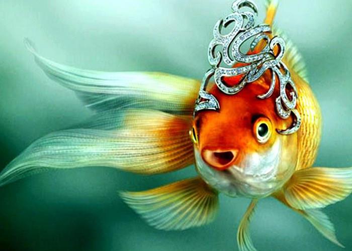Скачать песню золотой рыбкой быть не просто